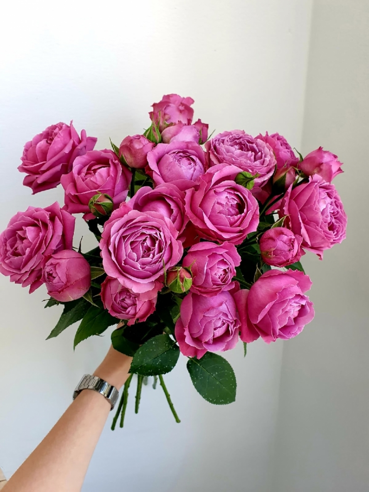 Пионовидная роза Misty bubbles