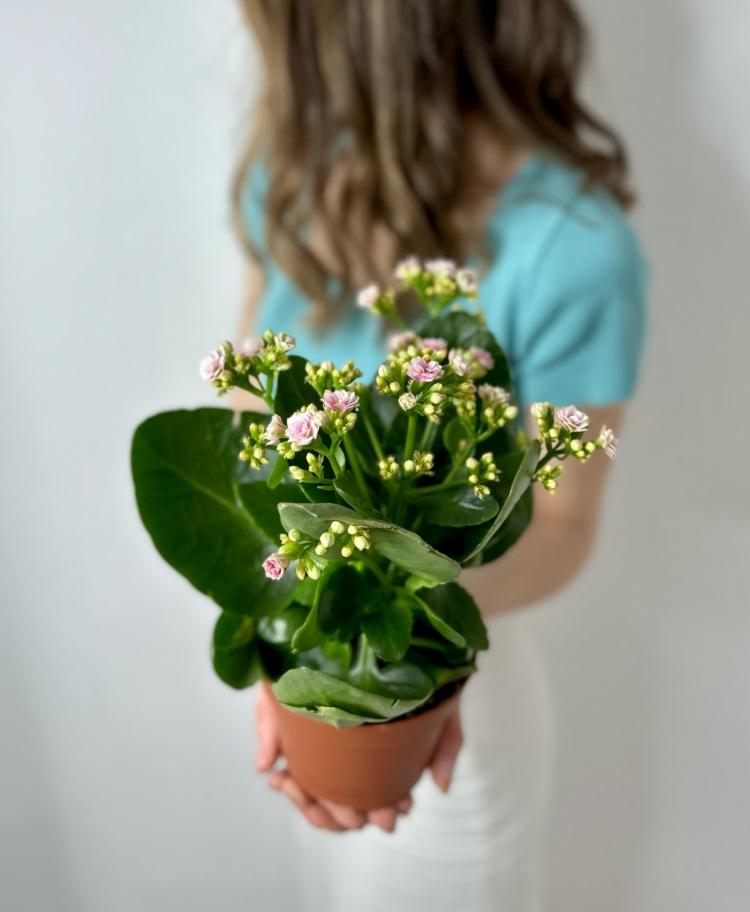 Роза Pink Mondial Эквадор 80-90см Premium