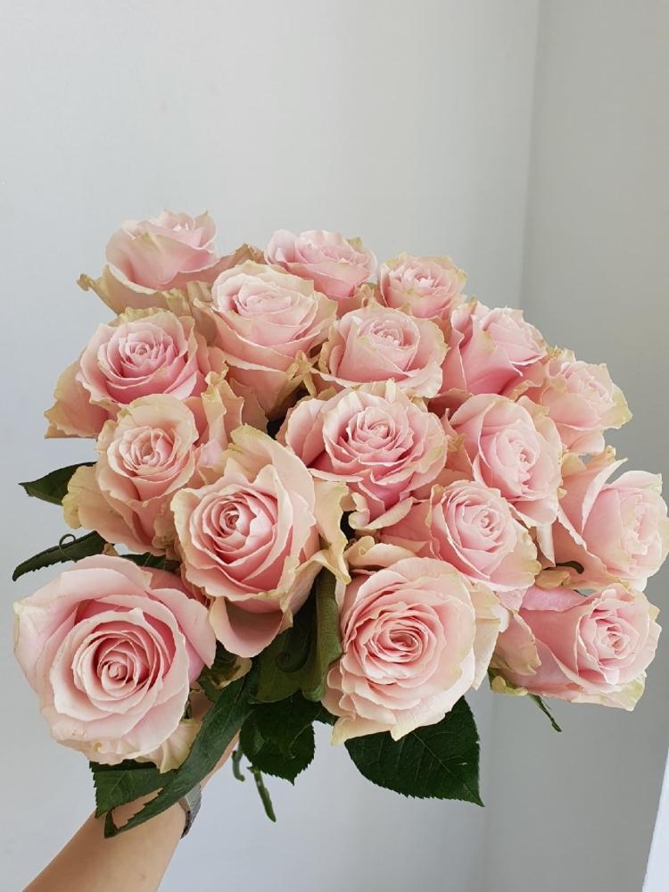Роза Pink Mondial Эквадор 60-70см Premium
