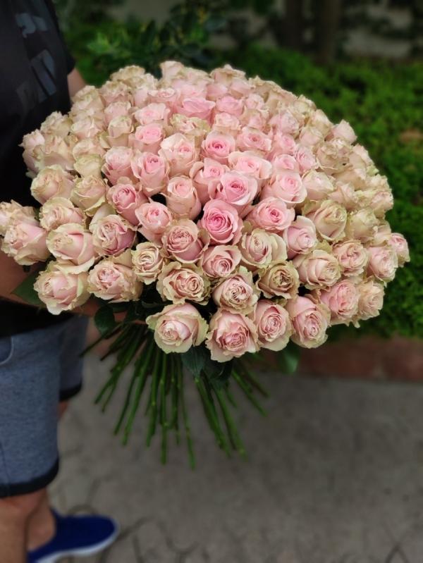 """Premium букет из 101 кремовой розы 60-70см """"Эквадор"""""""