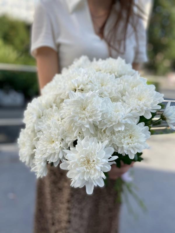 Кустовая хризантема White